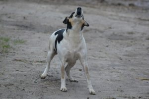 hond onzeker buitenland blaffen geadopteerd hersenwerk Doggo